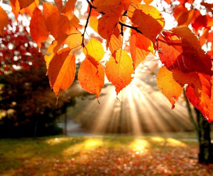 Plener jesienny