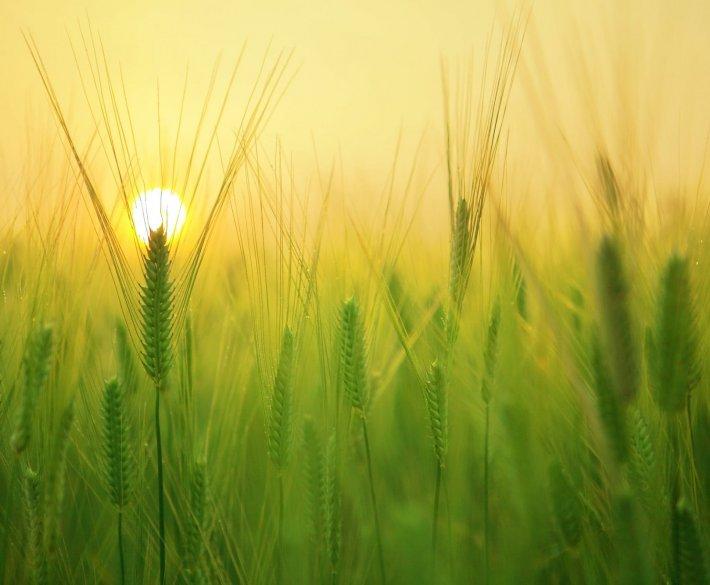 Plener przyrodniczy i zachód słońca